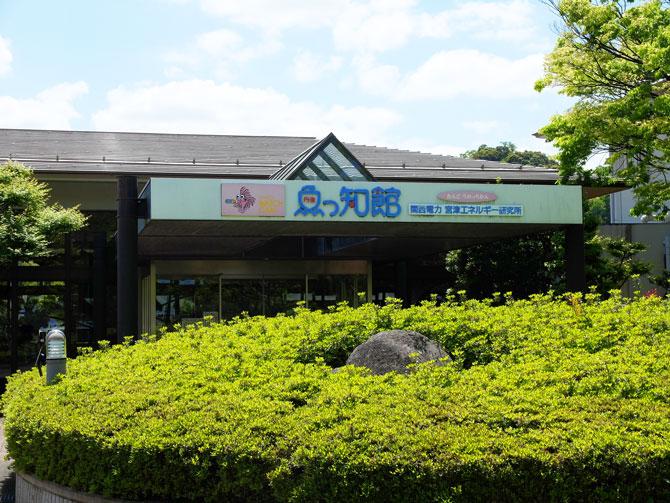 魚っ知館|宮津市 タッチングプールで魚と触れあえる水族館