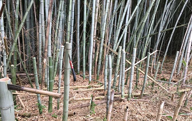 竹林の侵入を止める(防止方法)|竹の勢いを抑制したい