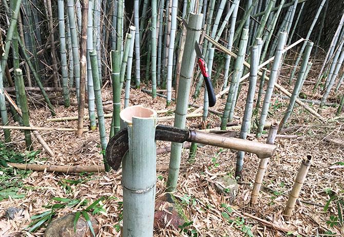 竹林の処理