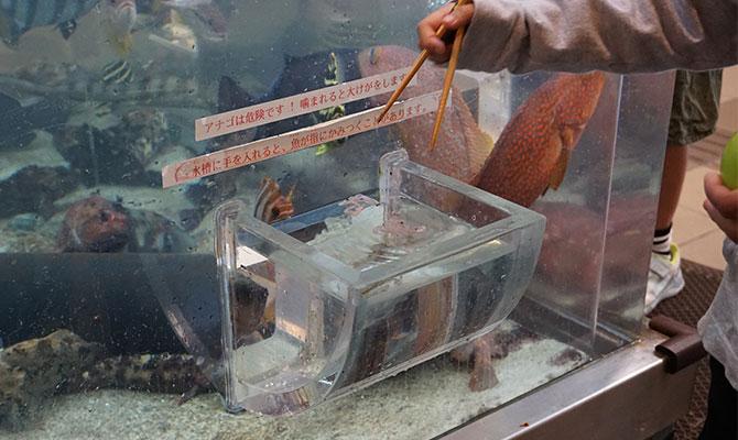 福井県海浜自然センター ふしぎな水槽