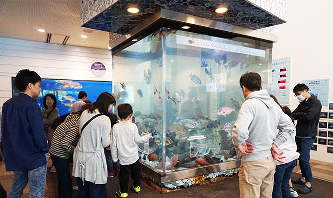 福井県海浜自然センターは魚にふれる体験がおもしろい