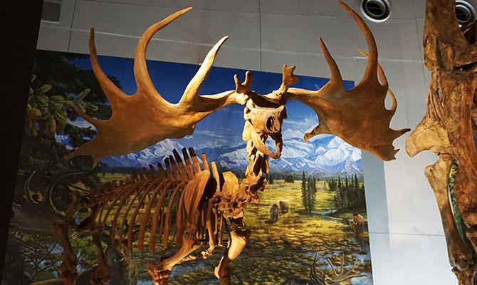 福井 恐竜博物館
