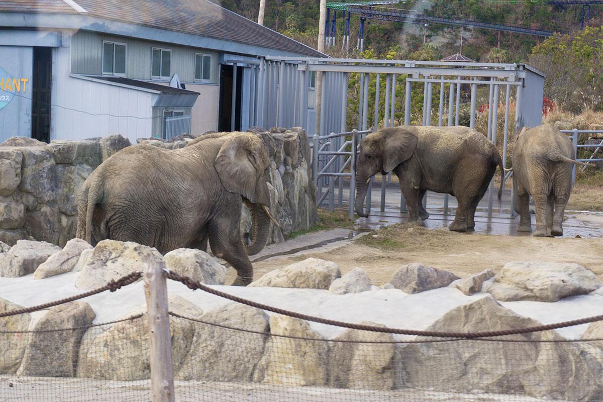 アドベンチャーワールド 象 ゾウ