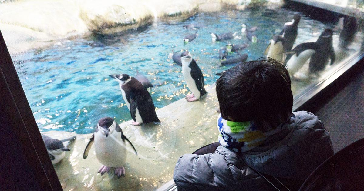 アドベンチャーワールド ペンギン