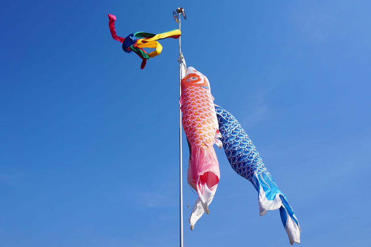 五月の鯉のぼり